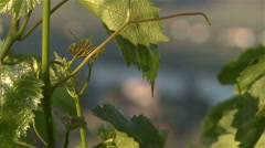 Douro river and vineyards. Oporto wine. Stock Footage
