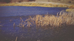 Broken canes in the lake. Vignette color - stock footage