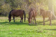 Horses in mountain ranch - stock photo