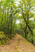 Road in Beech Forest and Robles - stock photo