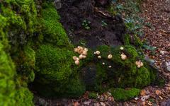 Mushrooms between Moss Green - stock photo