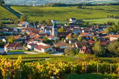 Champagne vineyards in the Cote des Bar Aube - stock photo