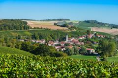 Champagne vineyards in the Cote des Bar Aube Stock Photos