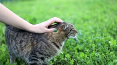 Girl playing with beautifull tabby cat in the green grass garden Stock Footage