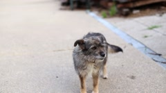 Adorable stray dog happy tail Stock Footage