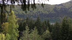 Mountain lake seen between fir tree branches Stock Footage
