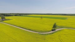 Establishing shot, countryside, flight over canola field, aerial. - stock footage