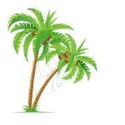 Two palm trees. Illustration for design on white background - stock illustration