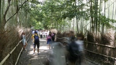 Bamboo Forest Time Lapse - stock footage