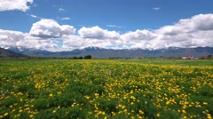 Aerial shot flying field of flowers in mountain valley Stock Footage