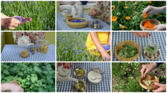 Hands gather herb plants and make herbal tea. Clips collage Stock Footage