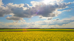 Blooming rapeseed field, panoramic time-lapse Stock Footage