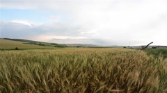 Wheat field now bakebesides a road that is circulating cars - stock footage