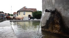 Herd of cows that pass near a spring arranged in village center - stock footage