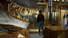 4K Mother & son in museum looking at a reconstructed model of a dinosaur Stock Footage
