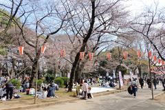 Ueno Park during the cherry blossom season - stock photo