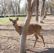 dappled deer - stock photo