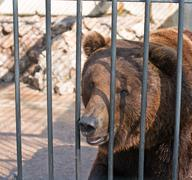 Bear in zoo Stock Photos