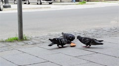 Group of pigeons who tries to break a donut thrown on the road into smaller Stock Footage