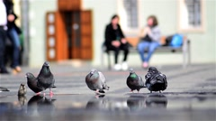 Pigeons sitting in the central square watch drink water while people pass by Stock Footage