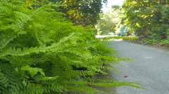 Green bush close-up with blur pathway park background Stock Footage