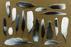 Feathers - negative image - stock photo