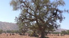 Herd of animals and shepherd in Africa Stock Footage