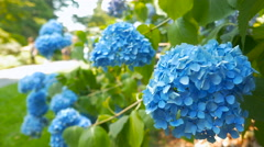 Amazing blue flowers close-up in the park Stock Footage