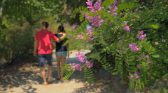 Purple flowers bush close-up with blur background couple walking in park - stock footage
