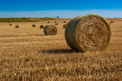Straw bales on farmland - stock photo