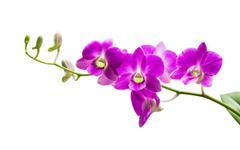 Bright purple orchid - stock photo