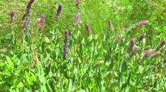 Wildflowers in the steppe Stock Footage