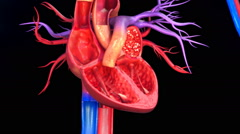 Functioning of human heart Stock Footage