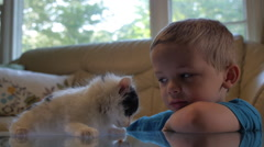 Young Boy - Petting, snuggling Kitten Cat Stock Footage