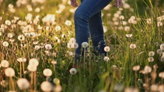 Feet girl walking on the field with dandelions at sunset Stock Footage