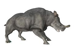 3D Rendering Brontotherium on White Stock Illustration