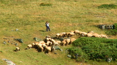 Shepherd plays the flute while keeping sheep on the mountain - stock footage