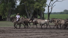 Gauchos demonstrate horsemanship with horses on ranch in Argentina pampas - stock footage