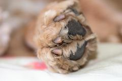 Dog paw  macro close up detail Kuvituskuvat