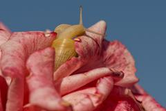 Snail close up portrait on flower background Stock Photos