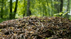 AntHill on Tree Trunk - closeup ants colony Stock Footage