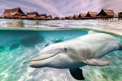 dolphin underwater on ocean background looking at you near tropical resort pa - stock photo
