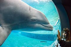 dolphin underwater in aquarium looking at you - stock photo