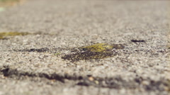 Tiny ants eating egg yolk on ground in slow motion Stock Footage