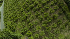 Orchard Aerial: Late Spring With Trees Bearing Fruit/High Angle Stock Footage