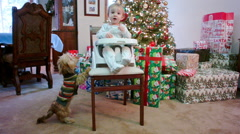 Little Girl Eating on Christmas with a Little Cute Dog Begging 2 Stock Footage