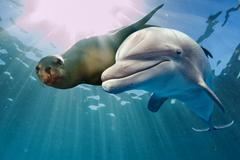 Dolphin and sea lion underwater on ocean background looking at you Stock Photos