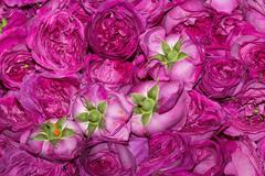 Edible roses on sale at Market Stock Photos