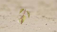Drought desert landscape plant Stock Footage