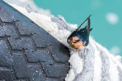 Portrait of swallow swift on jetty Stock Photos
